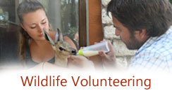 Wildlife Volunteering