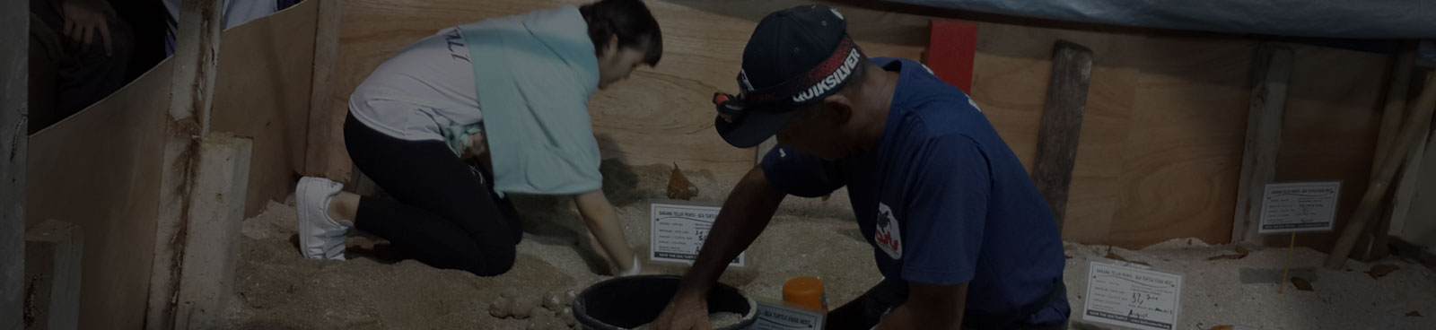 teaching and turtle project in bali