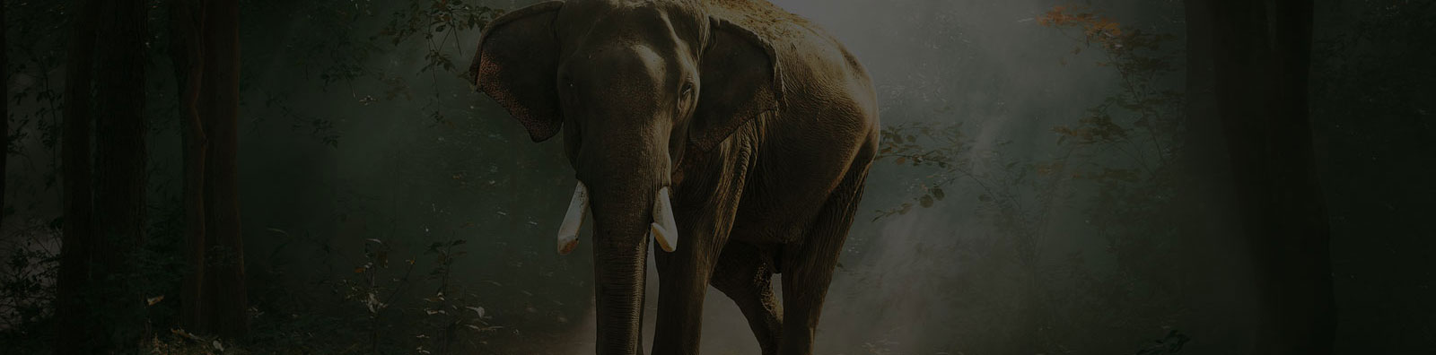 volunteer in thailand elephant projects