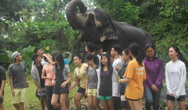 Elephant Sanctuary Volunteer[ Unique Experience] – Since 2006